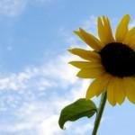 sommer-og-sol